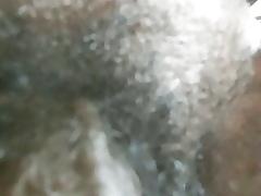 Asian  gumshoe